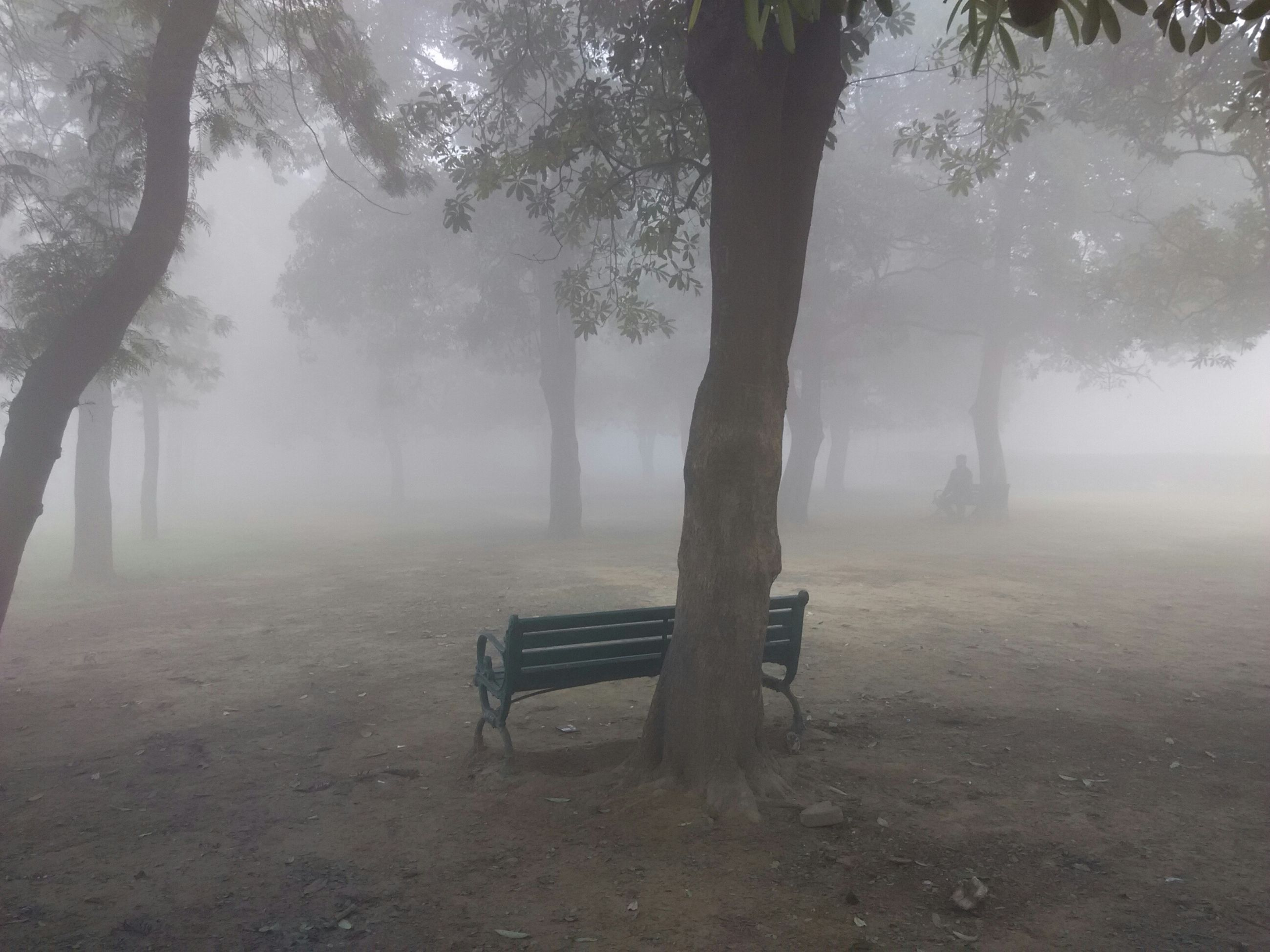 fog, tree, foggy, tranquility, tranquil scene, bench, weather, nature, empty, tree trunk, scenics, beauty in nature, absence, growth, forest, day, park bench, non-urban scene, water, idyllic