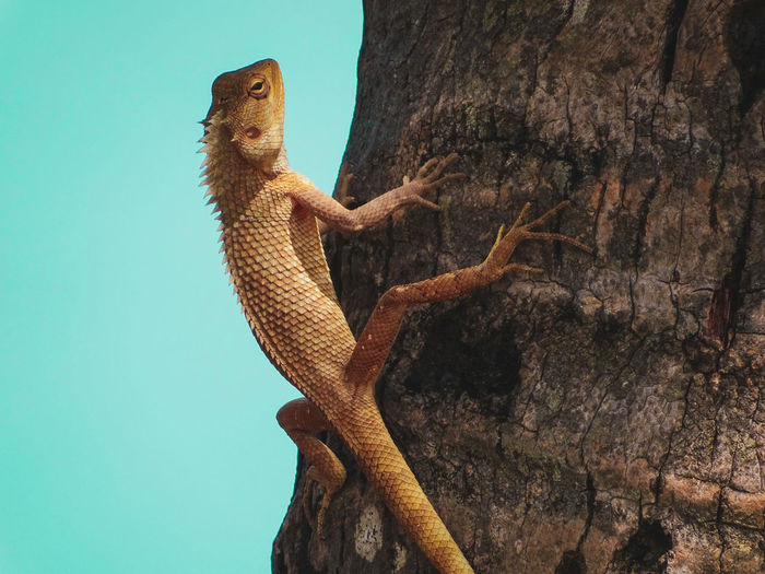 Low angle view of lizard on tree trunk