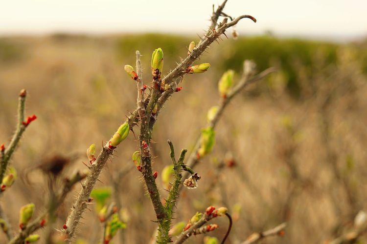 #green #growing #jumping #leaves #Plant #plantation #spring #springtime