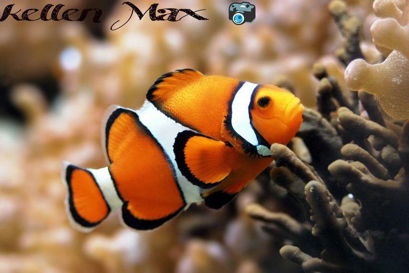 Fish 🐟 First Eyeem Photo Eyeem Nature Eyem Fish