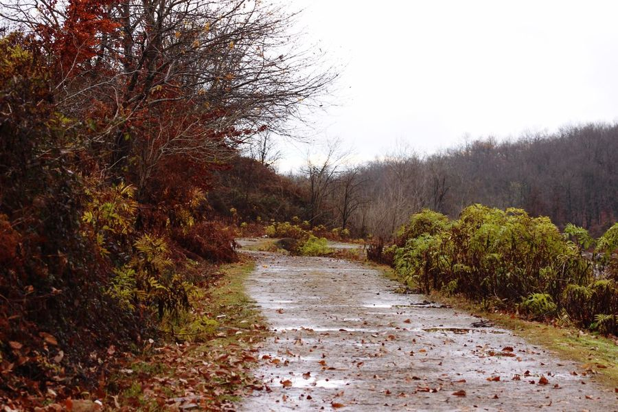 Landscape Nature Fall Rain