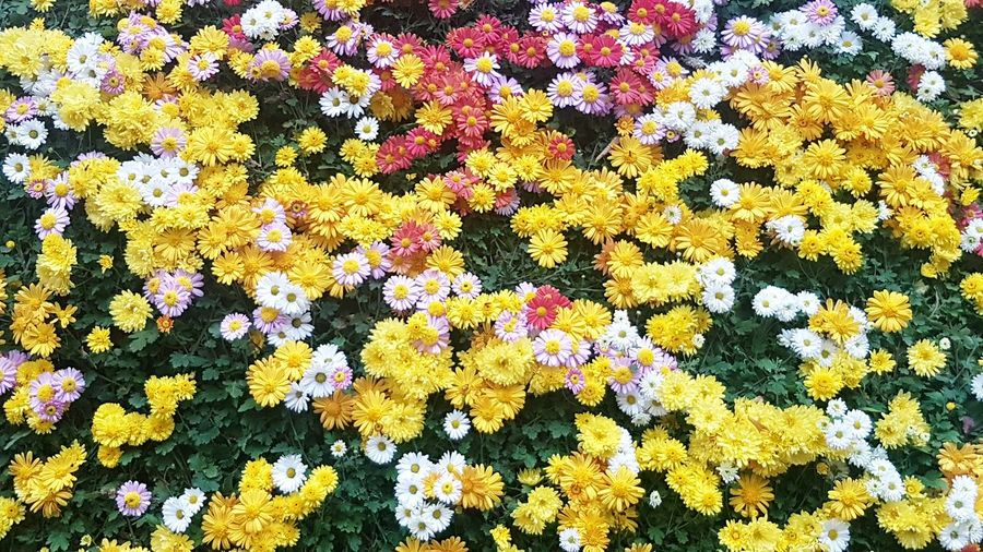 High angle view of marigold hanging on yellow flowers