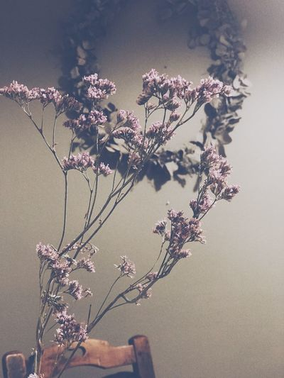 Close-Up Of Dried Flowers Against Wall