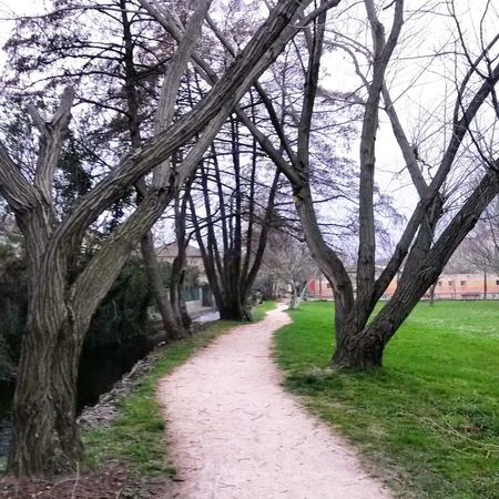 Walking Around Urban Landscape Taking Photos Relaxing Hello World Path Trees Nature Nature Photography
