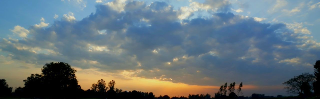 Tree Cloud - Sky Sunset Nature Sky Blue Dramatic Sky Silhouette Scenics WoodLand Pine Tree Pinaceae Forest Outdoors Beauty In Nature Landscape Tree Area Tranquility Rural Scene Sunlight