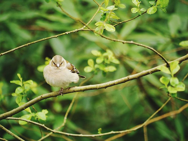 Bird One Animal Animal Themes Animals In The Wild Perching Animal Wildlife Branch Focus On Foreground Tree Low Angle View Nature No People Day Outdoors Beauty In Nature Sparrow Close-up Mammal Mourning Dove Beauty In Nature Devon Happy EyeEmNewHere
