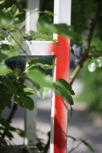Close-up of fresh red leaf on metal pole