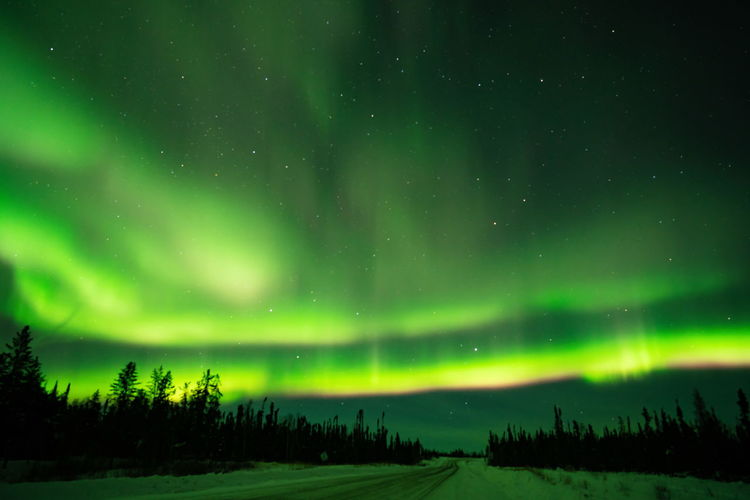 Northern lights (Aurora borealis) with starry sky above forest, Yellowknife, Canada Night Beauty In Nature Astronomy Scenics - Nature Space Green Color Sky Star - Space Tranquility Tranquil Scene No People Idyllic Cold Temperature Plant Winter Non-urban Scene Environment Tree Nature Landscape Aurora Polaris