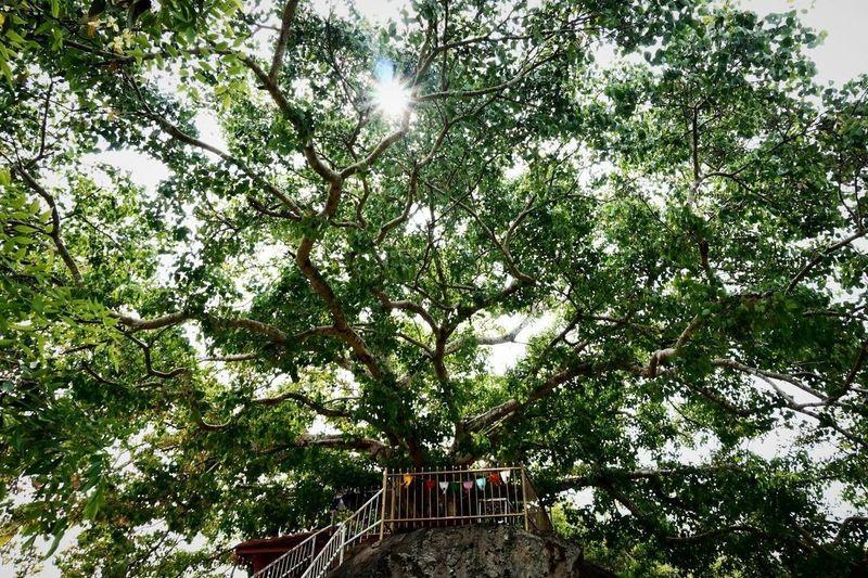 Sri Lanka Anuradhapura Sacred Tree Holy Tree Flags Buddhism Nature Majestic Sunlight