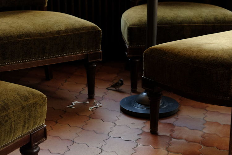 High angle view of bird perching by chairs on tiled floor