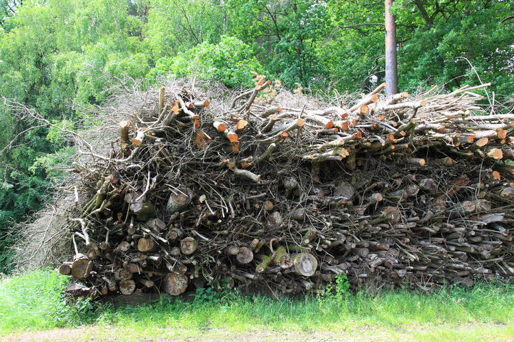 A large pile of wood waste at the forestry is waiting for the shredder Day Dead Plant Deforestation Environmental Issues Field Firewood Firewood Stack Forest Grass Green Color Growth Land Log Nature No People Outdoors Plant Stack Timber Tranquility Tree Wood Wood - Material
