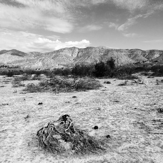 Big Morongo Canyon Preserve Walking Around Hiking Monochrome Outdoors Landscape Blackandwhite Protecting Where We Play