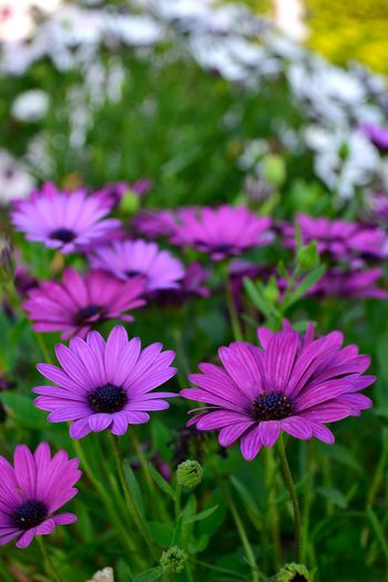 Flowers Flowers,Plants & Garden Plants Check This Out