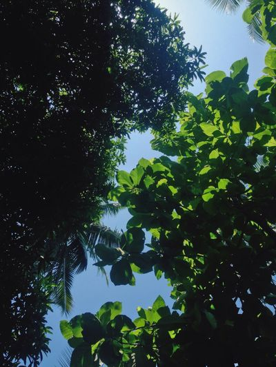 2nd Pic  Trees Green Nature Day Sky Tree Canopy  Low Angle View