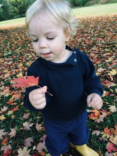 Toddler holding a maple leaf in fall Pondering Thinking Red Leaf Canada Fall Leaves Red Childhood Child One Person Real People Lifestyles Blond Hair Leisure Activity Casual Clothing Standing Autumn Looking Innocence Outdoors