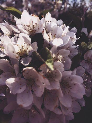 Flowers Blooming Flowers Summertime EyeEm