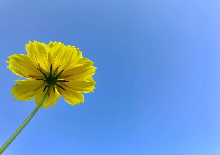 Under The Flower Flower Yellow
