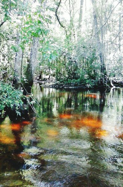 Ochlawaha Creek Lake Life Country Life Nature Creek Beautiful Day Spring Water