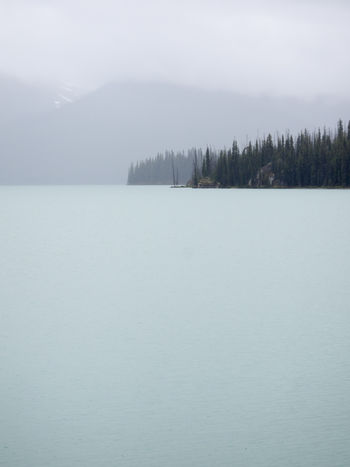 Alberta Beauty In Nature Canada Cold Temperature Day Fog Jasper National Park Lake Landsape Landscape Landscape_Collection Landscape_photography Mountain Nature No People Outdoors Scenics Sky Snow Tranquil Scene Tranquility Tree Water Winter