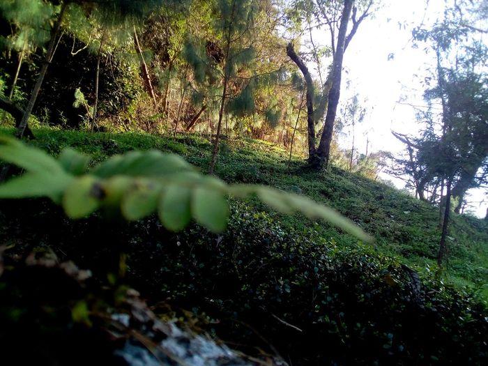 naturaleza y