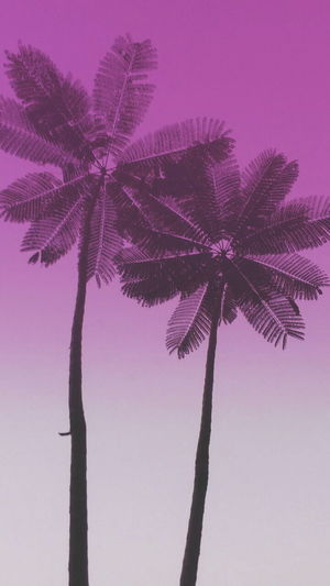 Palm Tree Tree Trunk Tree Purple Sky Silhouette Summer Beauty In Nature No People Low Angle View Nature Branch Plant Part Outdoors Coconut Sunset Day