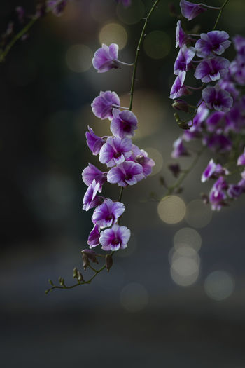 Flowers in nature Freshness Plant Beauty In Nature Growth Nature Focus On Foreground No People Day Outdoors Flower Flowering Plant Fragility Vulnerability  Purple Petal Close-up Flower Head Inflorescence Pink Color Botany Springtime Lilac