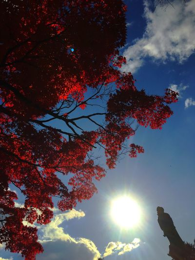市街地でも紅葉が真っ赤に染まりましたね。秋から冬へ真っしぐらです。 Tree Low Angle View Nature Sky Sunlight Sunbeam Beauty In Nature Cloud - Sky Day Sendai Days Statue Of Peaceful Prayers Clouds And Sky Autumn Autumn Colors Autumn Leaves Autumn Leaves Have Fallen, Winter Is Approaching... Miyagi