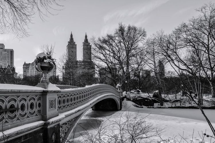 Central Park Park Manhattan New York New York City Bow Bridge Blackandwhite Black And White NYC NYC Photography Tree City Bridge - Man Made Structure Winter Snow Sky Architecture Built Structure Arch Bridge
