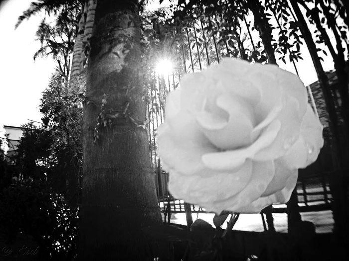 AMPt_community Flowerporn Bw_collection