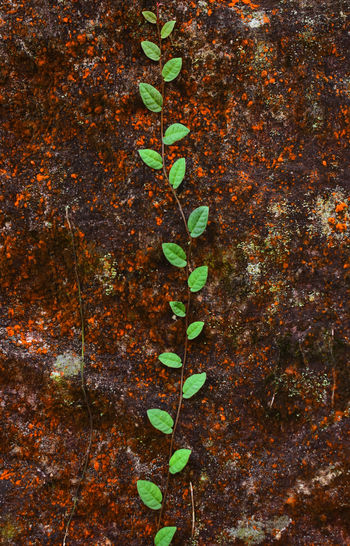 Compara Divided Green Green And Red Life Middle Line Nature Plant