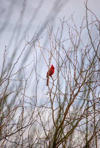 Bird on branch against bare tree
