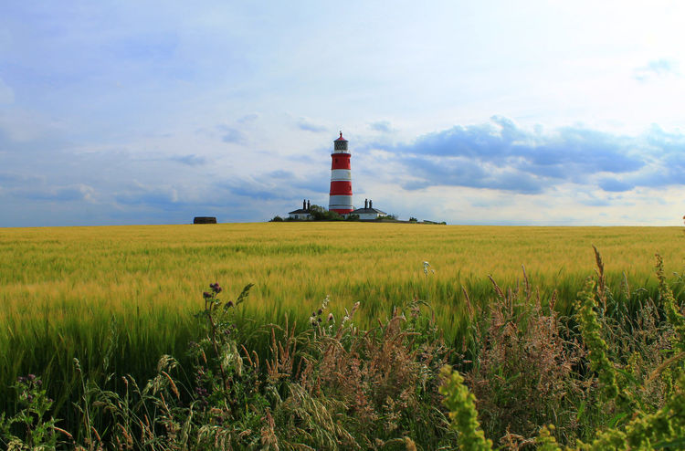 Agriculture Beauty In Nature Cloud - Sky Field Happisburgh Lighthouse Norfolk Norfolk Uk Norfolk! ! Rural Scene Grassland Landscape Norfolk Coast Norfolkcoast Happisburgh Lighthouse Lighthousephotography Lighthouse_lovers Lighthouses Lighthouse_captures Lighthouse View Light House Light House And Blue Sky Fields And Sky Fieldscape Field Of Dreams