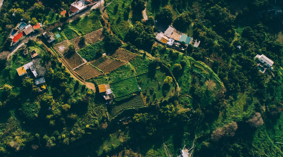 Field Aerial View Architecture Beauty In Nature Building Building Exterior Built Structure Day Environment Farmers Field Green Color Growth High Angle View House Land Landscape Nature No People Ojen Outdoors Plant Plantation Scenics - Nature Tree
