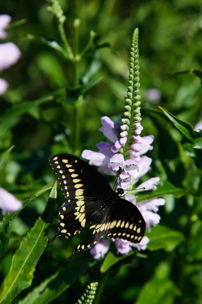 Flower Plant Flowering Plant Beauty In Nature Animal Themes Animal Wing One Animal Animal Wildlife Animal Insect Butterfly - Insect Invertebrate Animals In The Wild Growth Vulnerability
