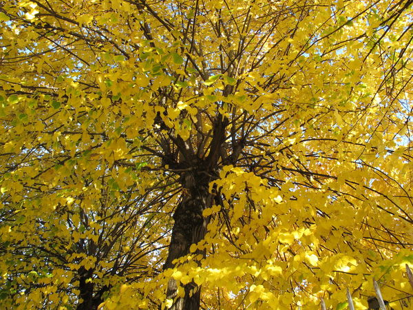 Autumn Beauty In Nature Branch Close-up Day Golden Tree Growth Nature No People Outdoors Tree Yellow