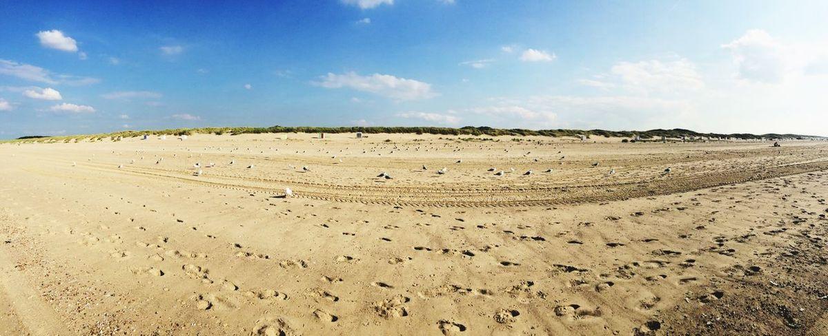 Seagulls Beach Panorama Panoramic Panoramic View Panoramic Photography
