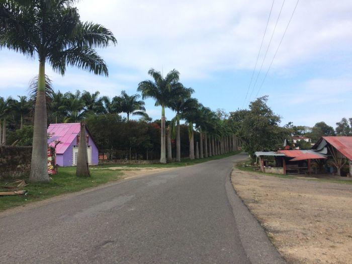 Palmas y Rosa Tree Plant Sky Road Built Structure Architecture Transportation