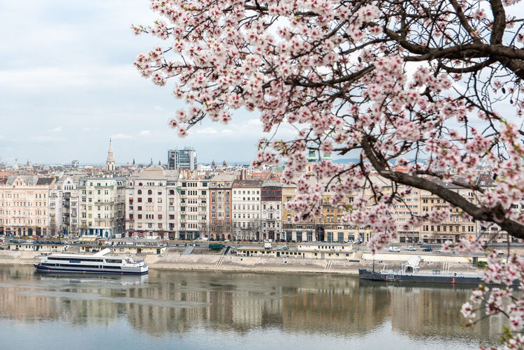 Cherry blossom by canal in city against sky