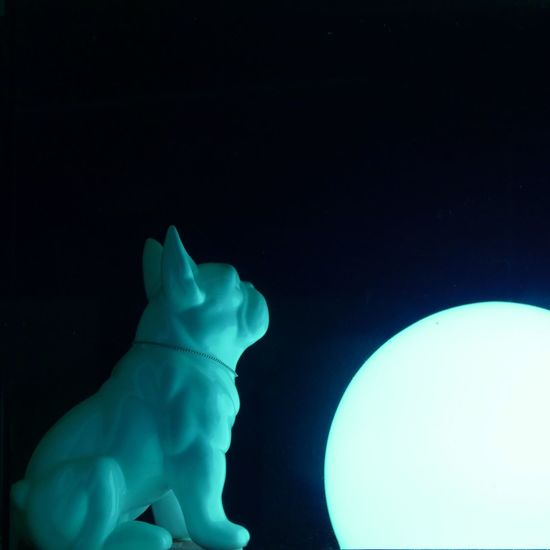 porcelain dog Dogs Of EyeEm Light Lights Moon Porcelain  Pug At Night Black Background Blue Close-up Dog Moonlight Moonlight ♥ Night Porcelain Dogs Sitting Alone White Window