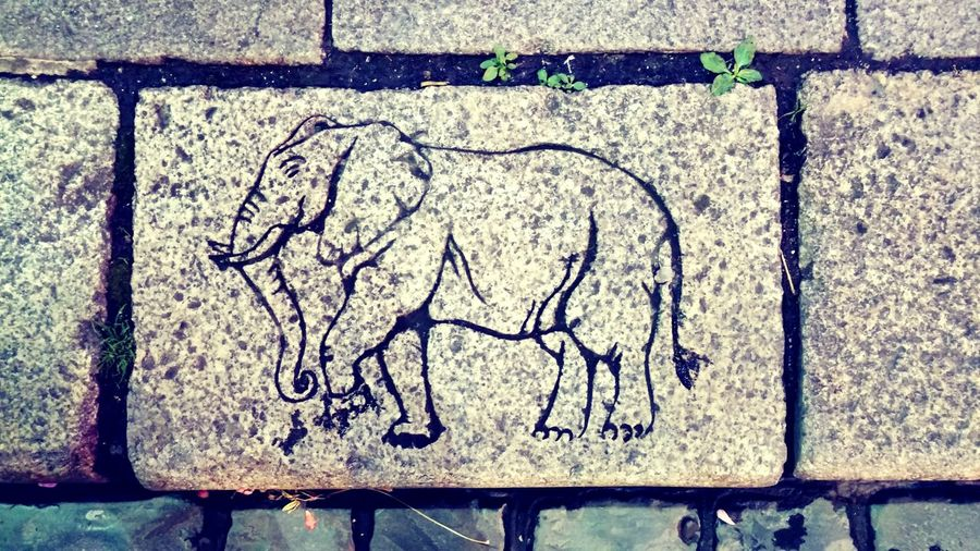 Is this Cool Elephant on the Pavement going Somewhere ? What Direction is he heading to?