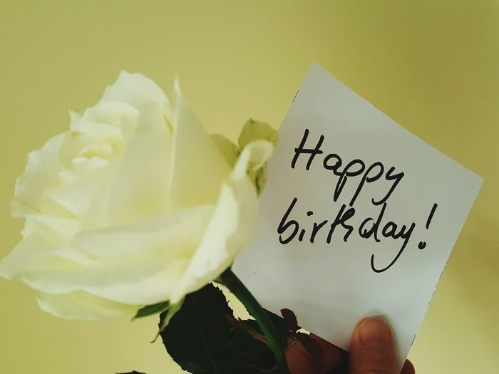 Human Hand Paper Human Body Part Text Happy Birthday Happy Birthday Paper Happy Birthday Written Birthday Birthday Letters Rosé Rose - Flower White Rose White Rose Birthday Birthday Rose Birthday Flower Happy Birthday Flower