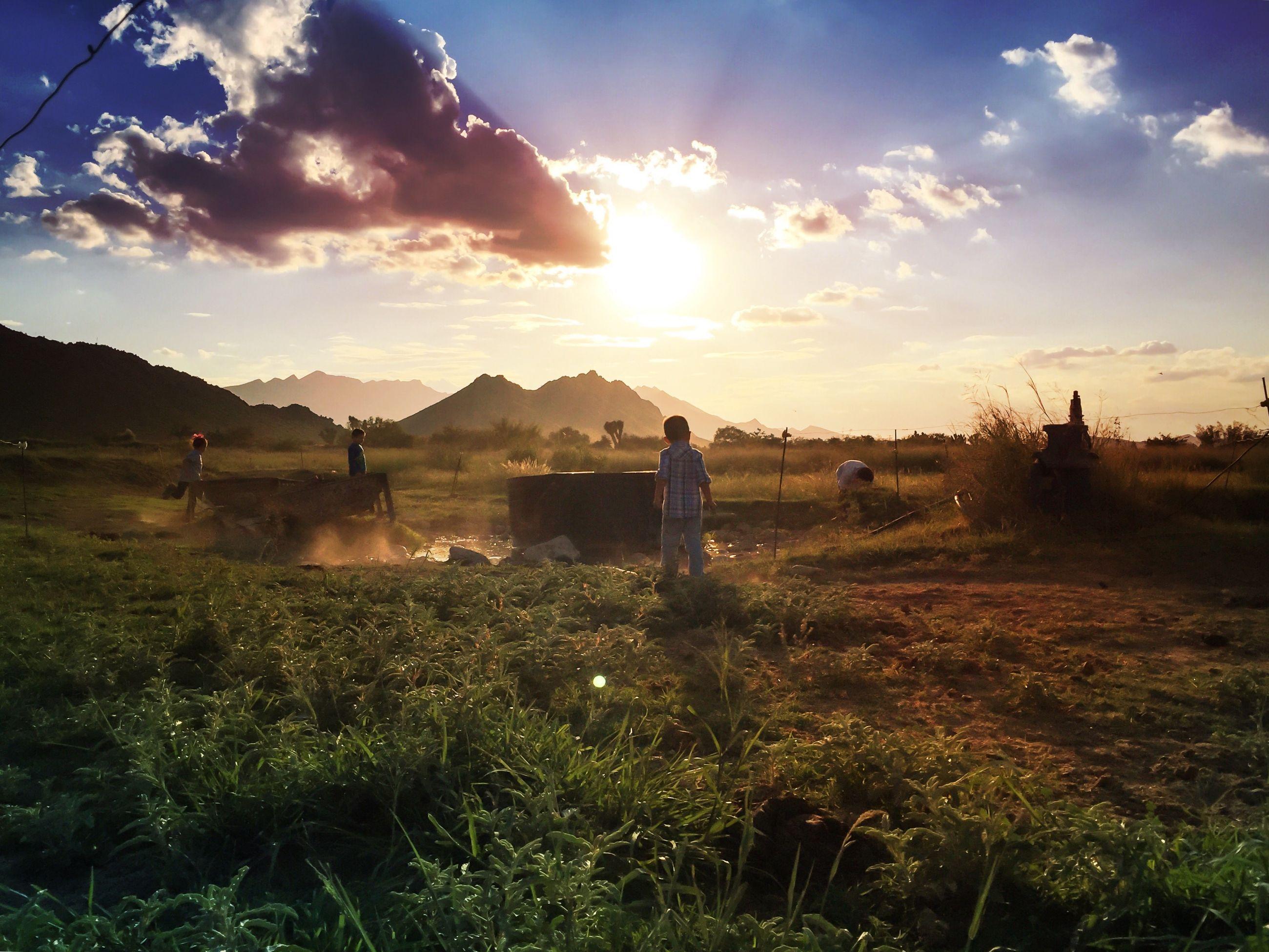 sky, landscape, field, sun, tranquil scene, grass, beauty in nature, scenics, sunlight, tranquility, nature, cloud - sky, sunset, sunbeam, growth, cloud, lens flare, tree, plant