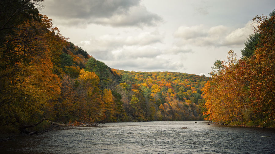 Scenic view of river amidst trees against sky during autumn