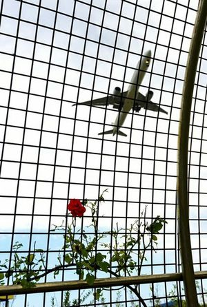 Airplane, red rose, Youngjong Island, South Korea
