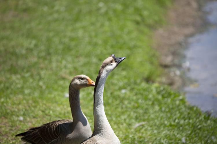 Close-up of a bird on land