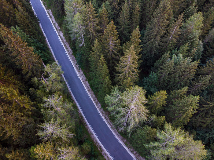 High angle view of road passing through forest