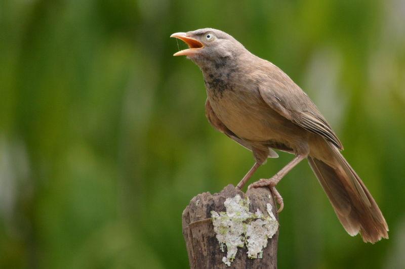 Close-up of bird perching on stump