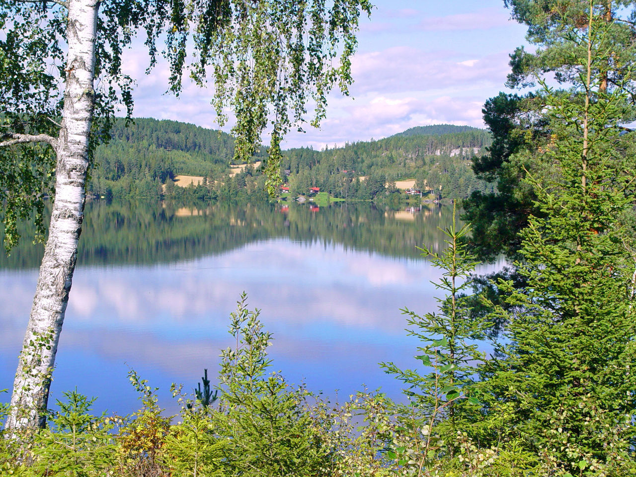 SCENIC VIEW OF LAKE AMIDST TREES AGAINST SKY