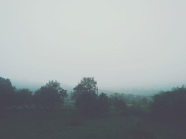 Foggy Morning Fog Landscape