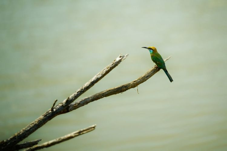 Bird Animals In The Wild Vertebrate Animal Wildlife Animal Themes One Animal Animal Perching No People Plant Branch Day Tree Nature Focus On Foreground Kingfisher Green Color Outdoors Beauty In Nature Twig Beak Stick - Plant Part